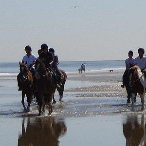 The beach saltburn riding school