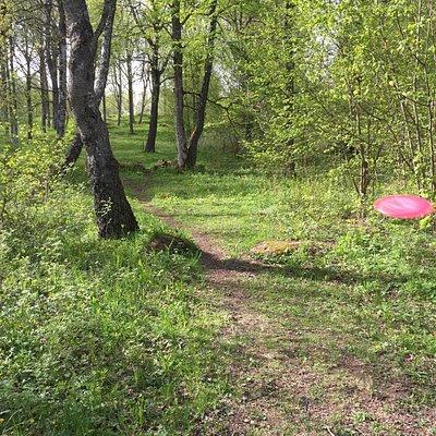 Gratis freesbe banan på Mössebergs friluftsområde