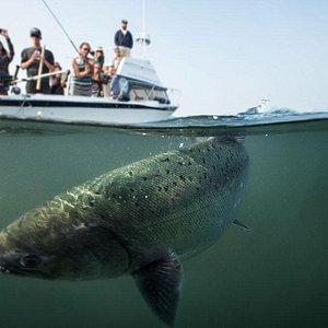 Tofino Fishing Adventures - Photo By John Kelsey