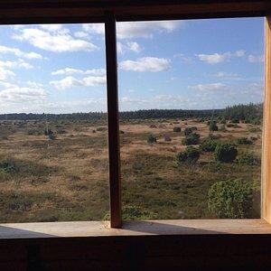 Utsikt fra tårnet.