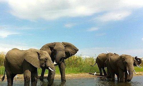 Gli elefanti del Liwonde national park