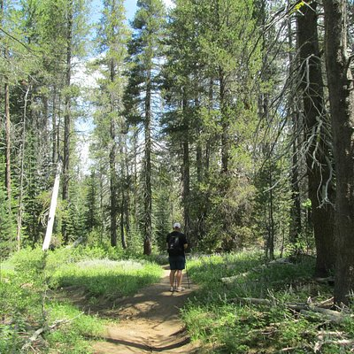 Trail to McGurk Meadow