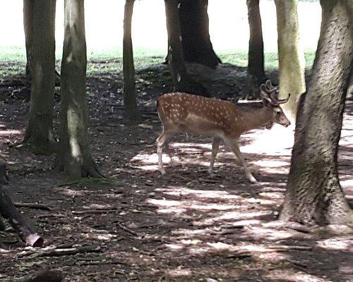 Wild animals in Obora Holedna