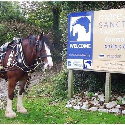Shire Horse Kavaner, who is also on our adoption scheme