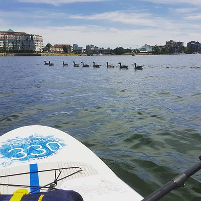 All my ducks in a row #SUPVic