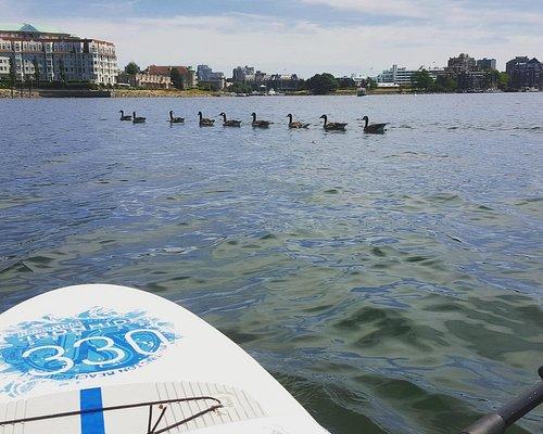All my ducks in a row #SUPVic
