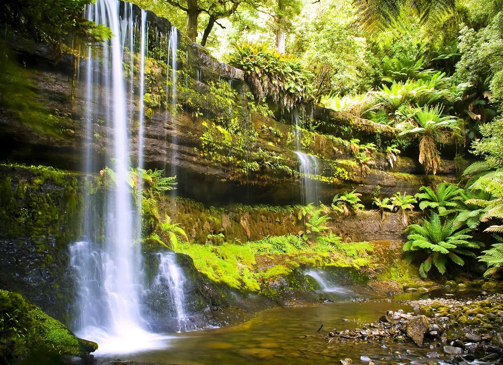 Russell Falls Day Tour
