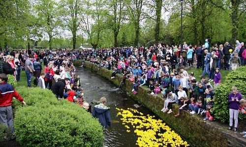 The annual duck race in the burn that runs through the park.