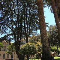 palmeras, árboles , agua, cielo azul .hermoso