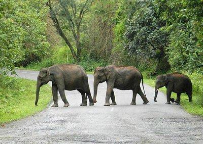 Elephants  | Wild Delta