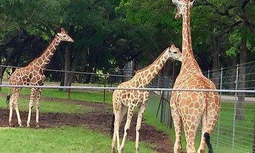 Wildlife Ranch outside Garden Ridge, Texas