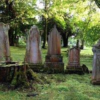 tree-stump and stones