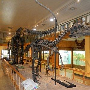 Full dinosaur skeleton