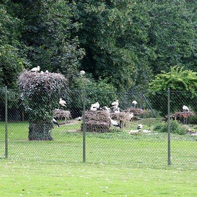 Storchenpflegestation Wesermarsch 4
