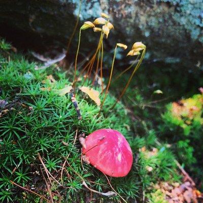 Fungus is Among Us