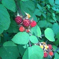 Wine berries yummy