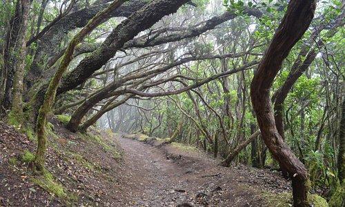 Bosque de Tejos