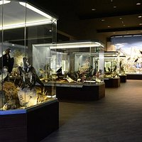 Inside the Natural History Museum of Meteora