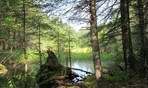 View from two lakes trail. Seward Alaska