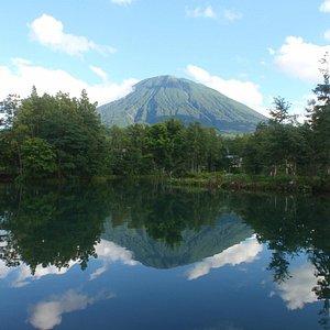 湧水の池には逆さ羊蹄山がうつりこみます。