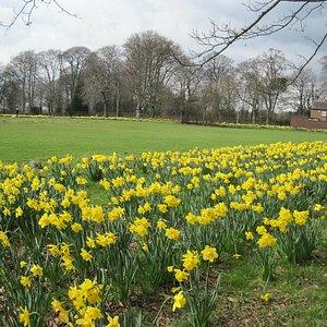 Spring in Clarke Gardens