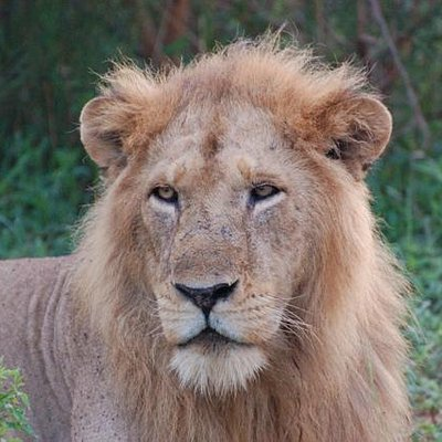 Portrait of the King - Murchison Falls National Park