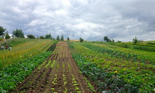 lite av odlingen