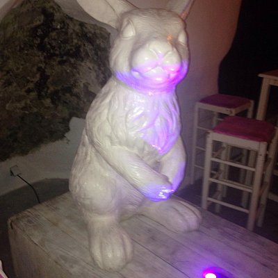 The White Rabbit at Bar 22!