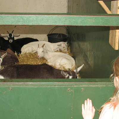 The goats we got to feed later on