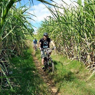 Traversée des champs de canne à sucre