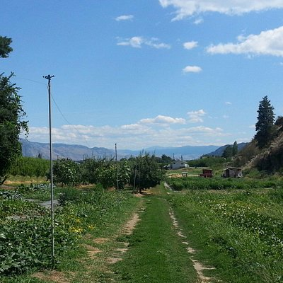 Hillside Orchards U-Pick and Farm