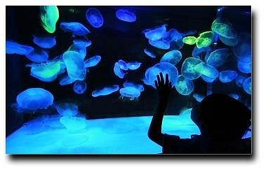 Explore a whole new world at the Austin Aquarium.