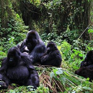 Susa Group- Gorillas Volcano's National Park