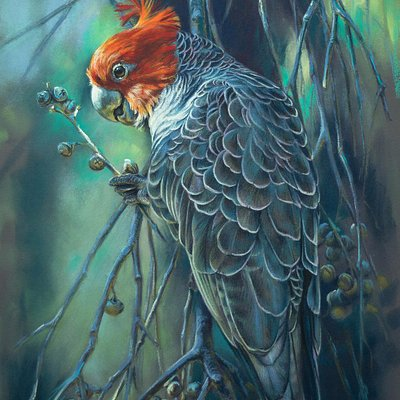 This painting is of a male gang gang cockatoo....a species often seen locally and when feeding q