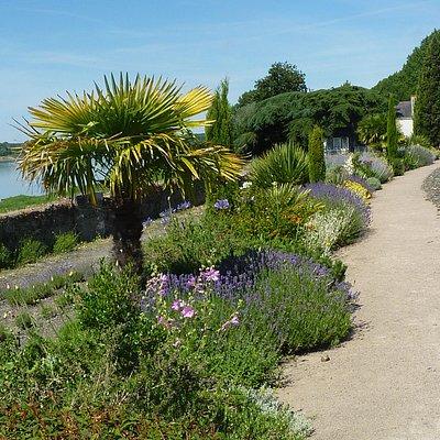 Un petit palmier avec la Loire en arrière-plan.