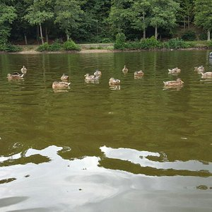 Lac de warfazz En Pédalo