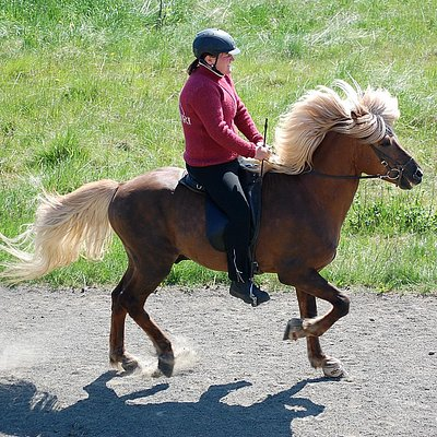 Entertaining horse show