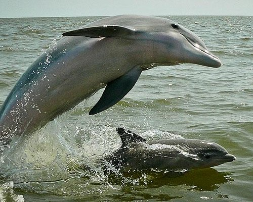 Dolphin Watching Tour @ Muscat , Oman - Picture3