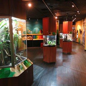 Exhibición de las ranas/ Frog exhibit