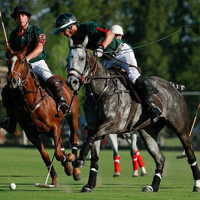 High handicap polo players
