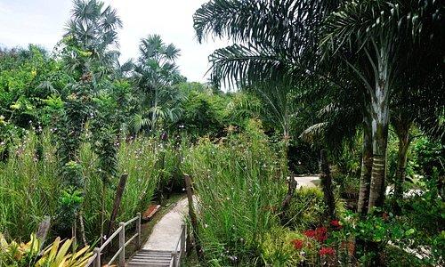 Jardin botanique de Guyane