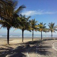 Orla com muitas palmeiras