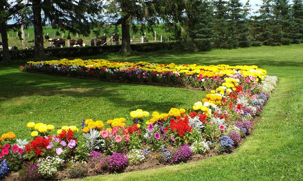 Flower Bed at Grand-Pre.