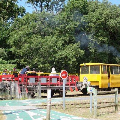 Petit train Le Verdon-Soulac_1
