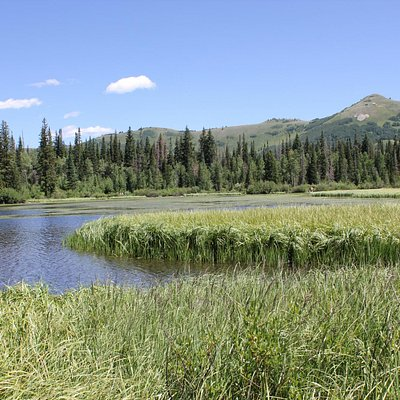 Wasatch-Cache National Forest Scenery