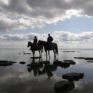 Horseback Ride along the Beach
