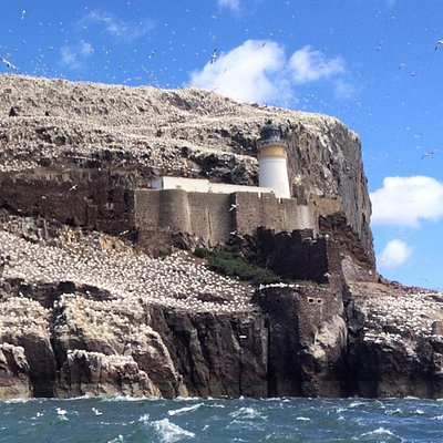 Craigleith and Bass Rock boat trip a must do!!