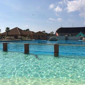 Le paradis ! Le bassin de baignade est séparé par une vitre avec le bassin des dauphins, pareil