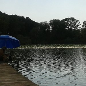 mare? no lago