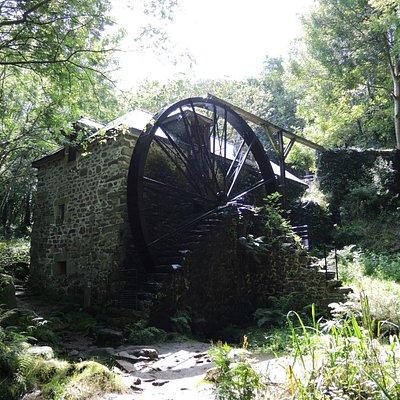 le moulin dans son écrin de verdure